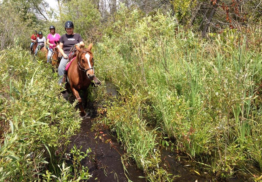 trail riding through pond