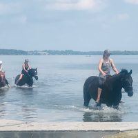 Riding through Water - horses swimming
