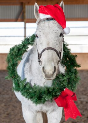 White Horse with Santa cap and wreath around neck
